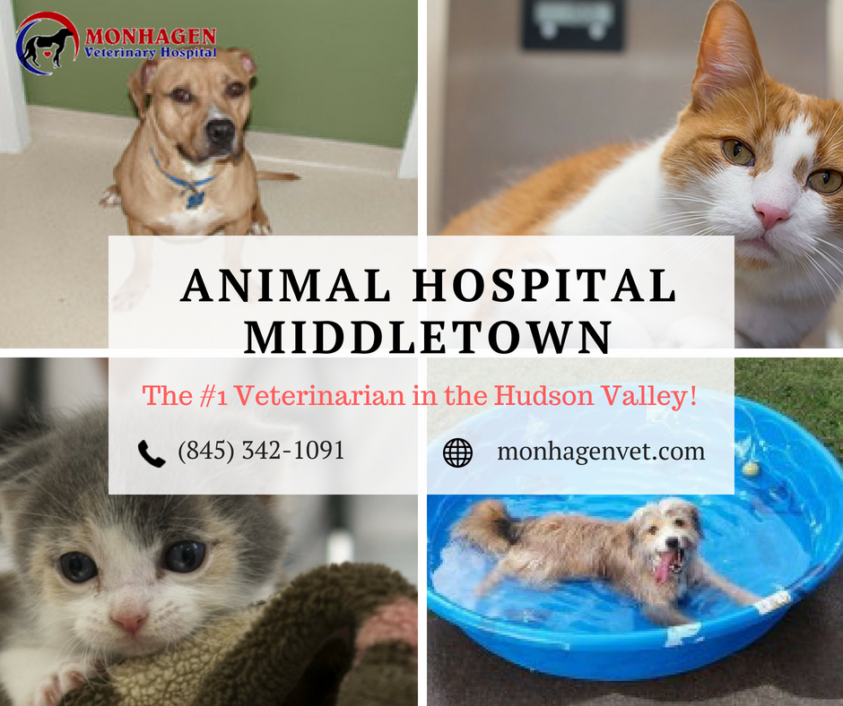 Bring Your Sick Pet At Animal Hospital In Middletown For Safe Services And For Clean Healthy And Happy Environment We Work Pet Vet Sick Pets Animal Hospital