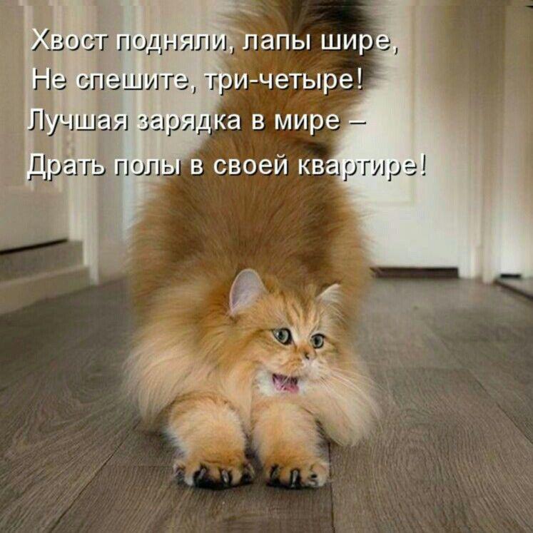 S Dobrym Utrom Yumor Pro Koshek Yumor Pro Zhivotnyh Smeshnye Shutki