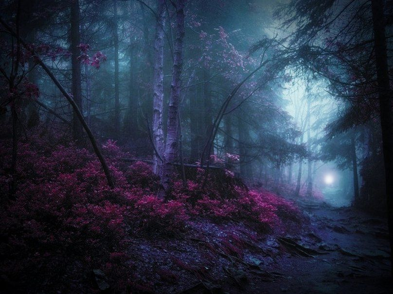 Mystical Snowy Forest mystic woods wallpaper Enchanted