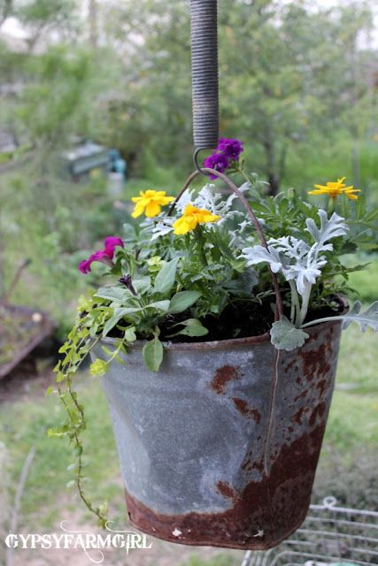 Old Rusty Bucket Planter; I have an old beat up white bucket that has flowers in it. Hubby drilled some drainage holes in the bottom first, though.