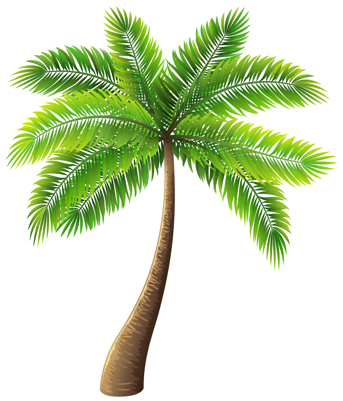 Palm Tree Clip Art Web Clipart Palm Tree Clip Art Web Clipart Art Clip Clipart Palm Tree Web Palm Tree Clip Art Palm Tree Drawing Palm Tree Png
