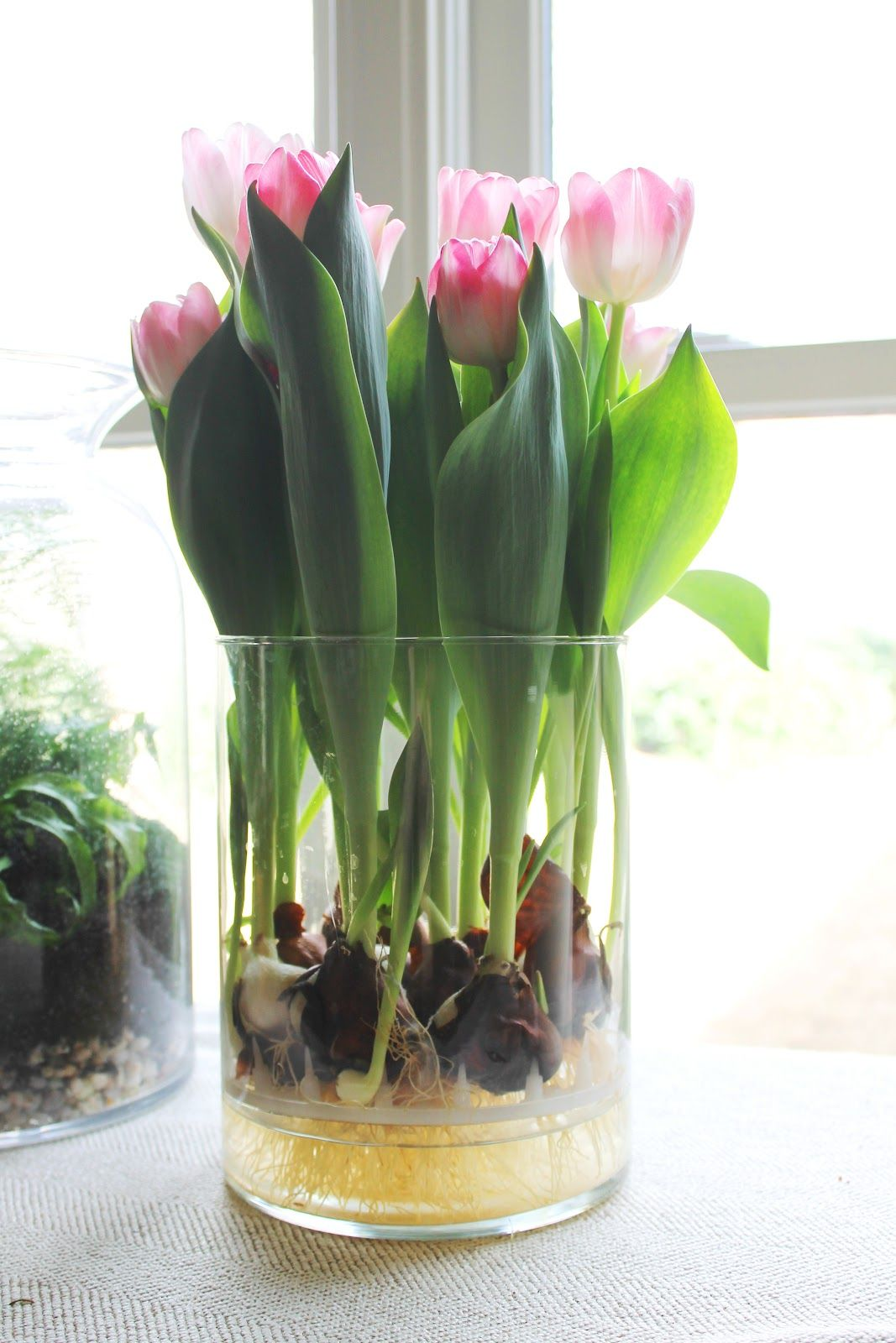 Bulbs in glass vase google search house ideas for Indoor gardening flowers