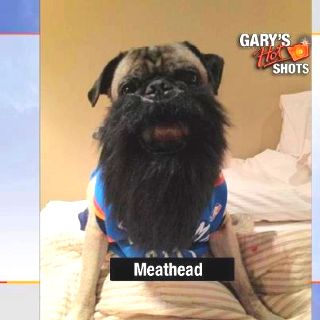 James Harden Pug Of The Okc Thunder Pugs Pug Mom Pug Love