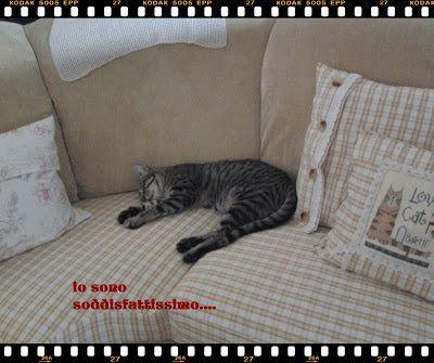 Sette gatti ed una nota : free