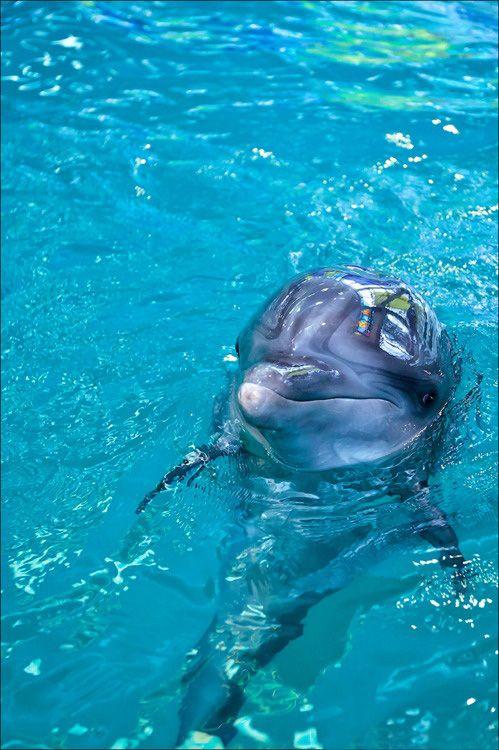 Дельфины-фотомодели   Thank u Earth   Дельфины, Океан и ...