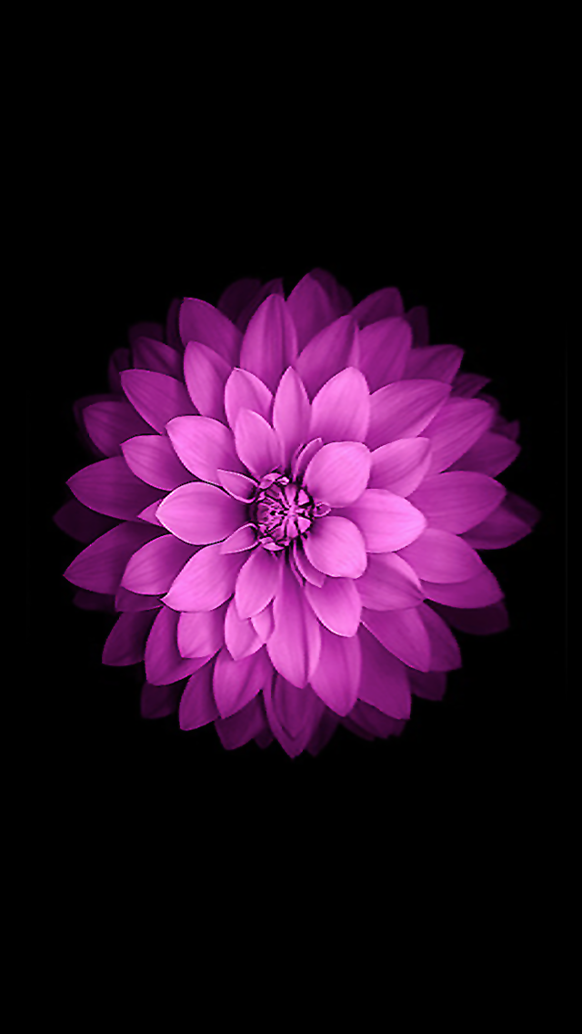 30 Most Popular Iphone Wallpapers Collection Flower Iphone Wallpaper Iphone 6 Flower Wallpaper Iphone 6s Wallpaper