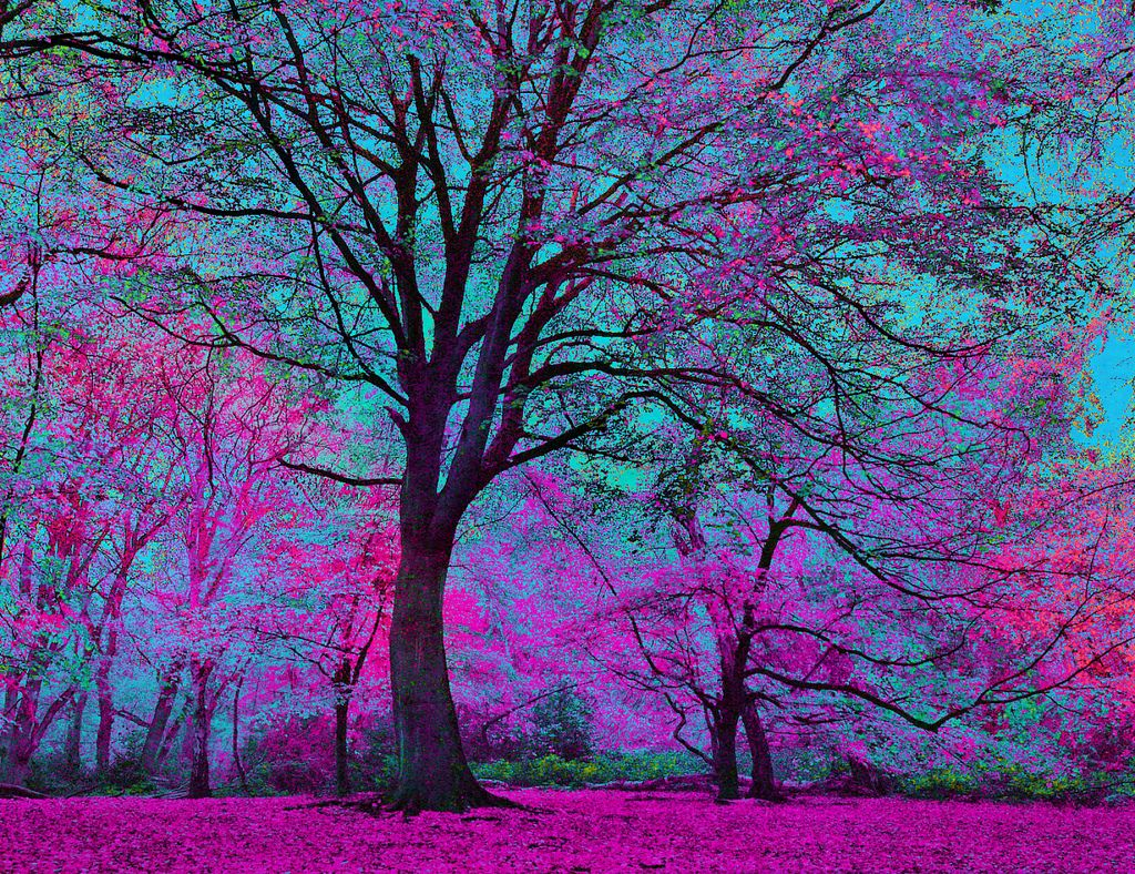 Rp Anyone I Was Sitting Under This Tree When Two Other Fangirls Come And My Purple Dragon Luna Is Sleeping By My Side Beautiful Tree Beautiful Nature Nature