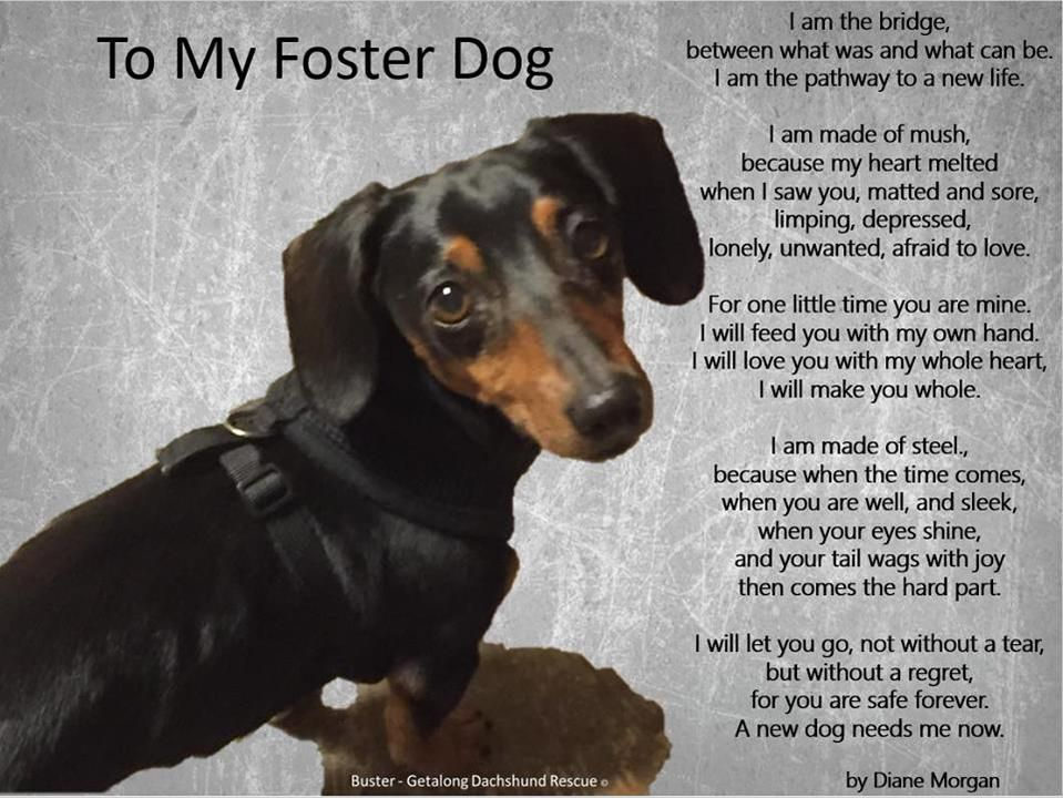 Cami Gdrdoggie On The Fosters Heart Melting Animal Rescue
