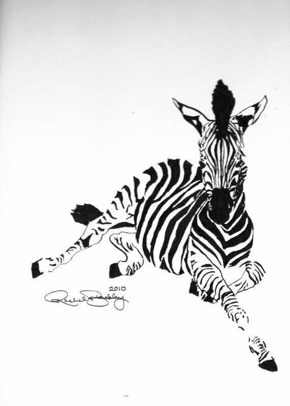 Young Zebra - Ink Sketch, Ink Drawing, Pen and Ink, Black ...