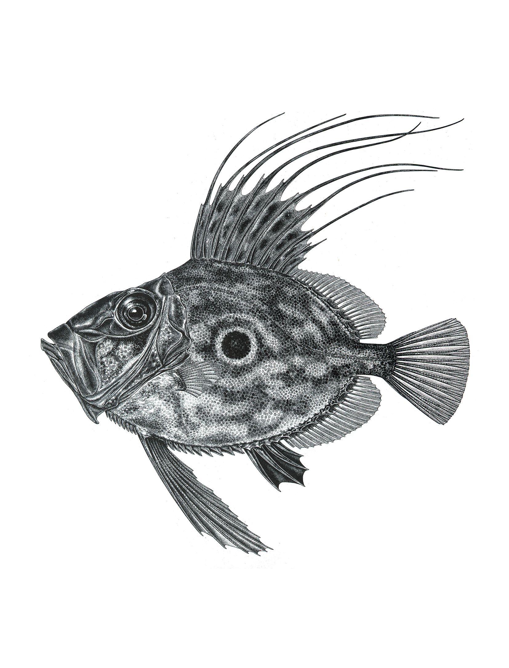 Ungewöhnlich Fisch Schädelanatomie Bilder - Anatomie Ideen - finotti ...