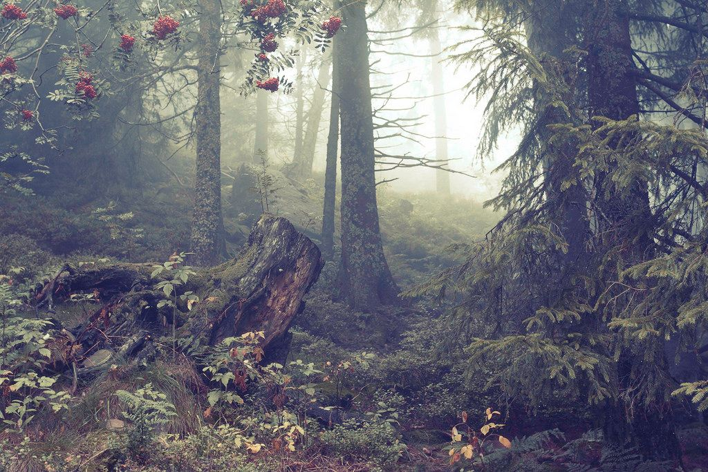 Foggy Woods in Black Forest (by alex WD)