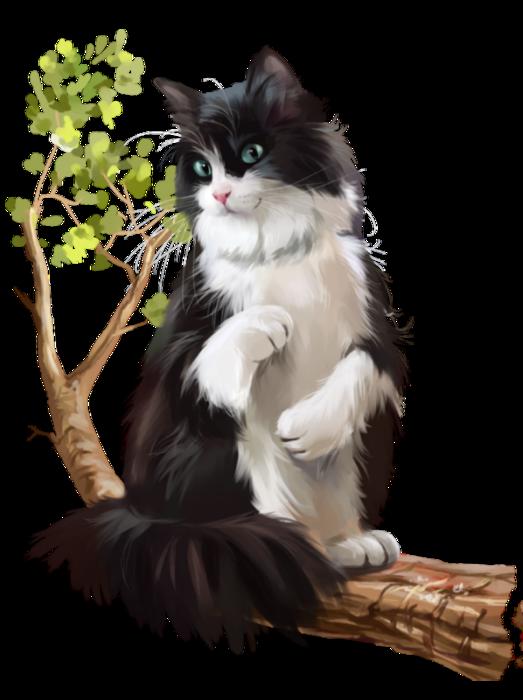 Chatons Chats Cat Gato Katze Katter Kettir Cait Dessin Animaux Mignons Illustration De Chat Chat Noir Et Blanc