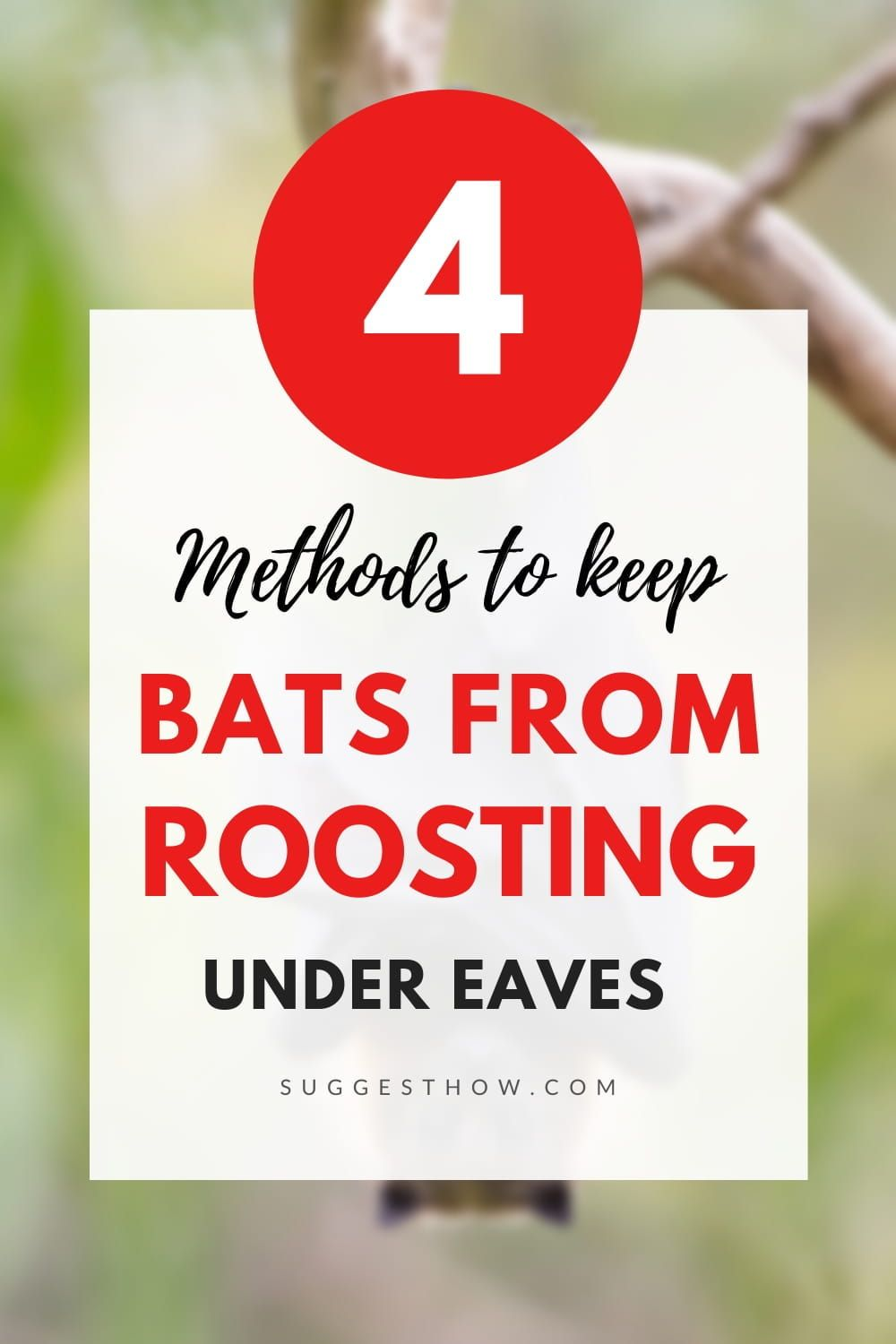 How To Keep Bats From Roosting Under Eaves in 2020