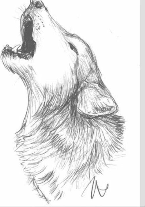 Pin Di O0neko0o Su Anatomy Animals Cose Da Disegnare Disegni A