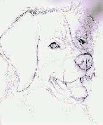 Falls Sie Tiere Mogen Besonders Die Hunde Dann Ist Diese Seite Fur Sie Sie Konnen Selber Einen Hund Mit Bleistif Tiere Malen Hund Zeichnen Zeichnungen Tiere