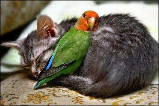 Put a bird on it ;)
