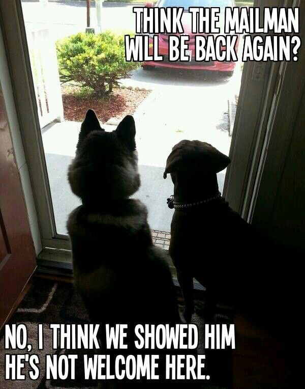 Dogs V Mailman Dog Quotes Funny Funny Dogs Funny Animals