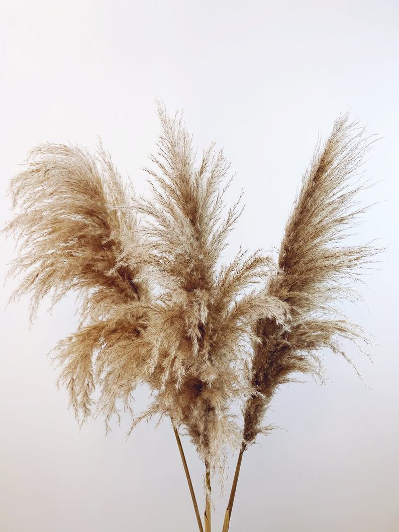 Extra Tall Large Fluffy Dried Natural Brown Pampas Grass Etsy Pampas Grass Grass Pattern Brown Aesthetic