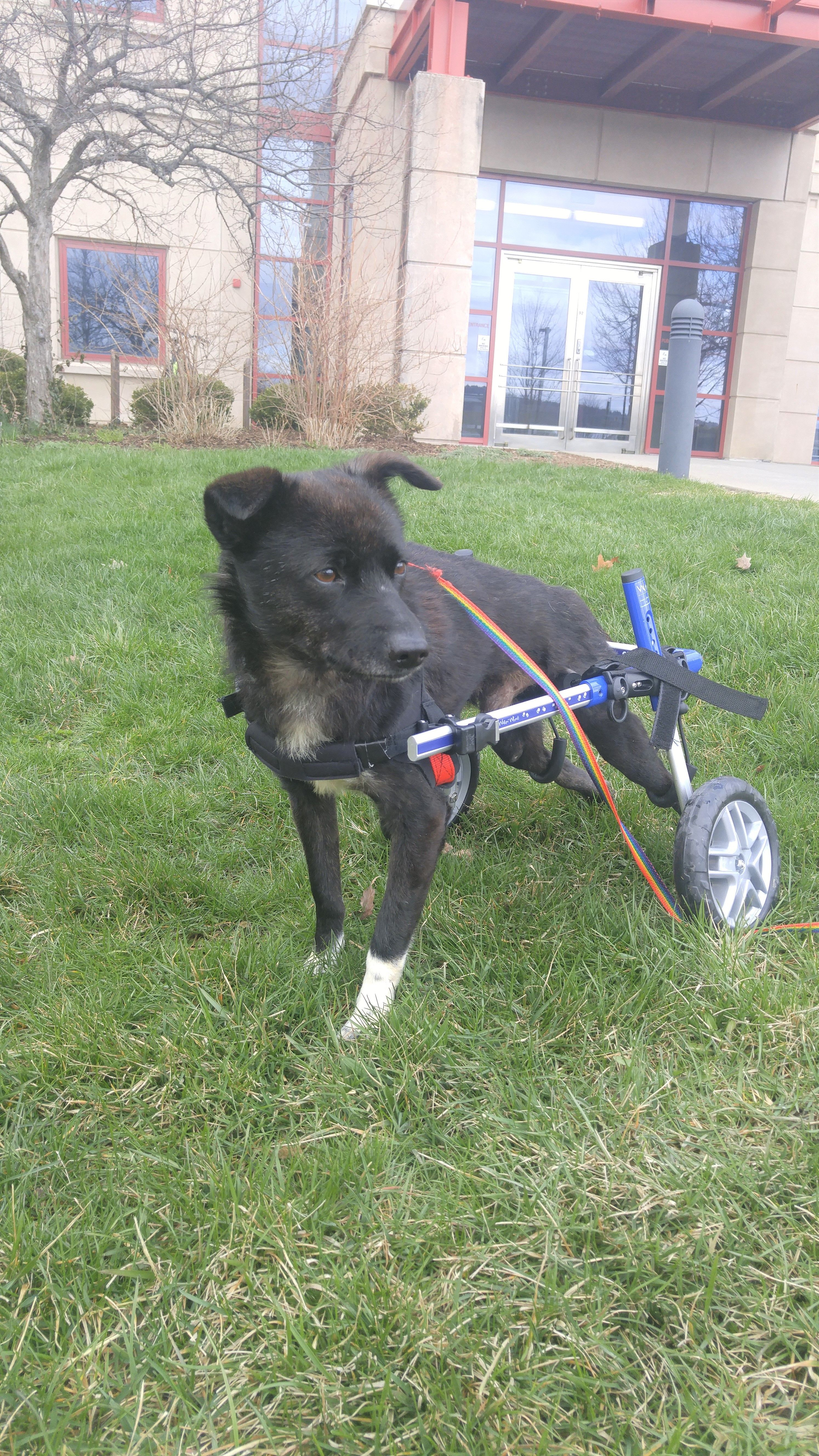 "Adopt Sammy (aka ""Scampers!"") Hilarious! on Pet stroller"