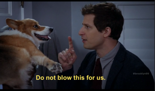Jake The Dog Holding A Sign Meme