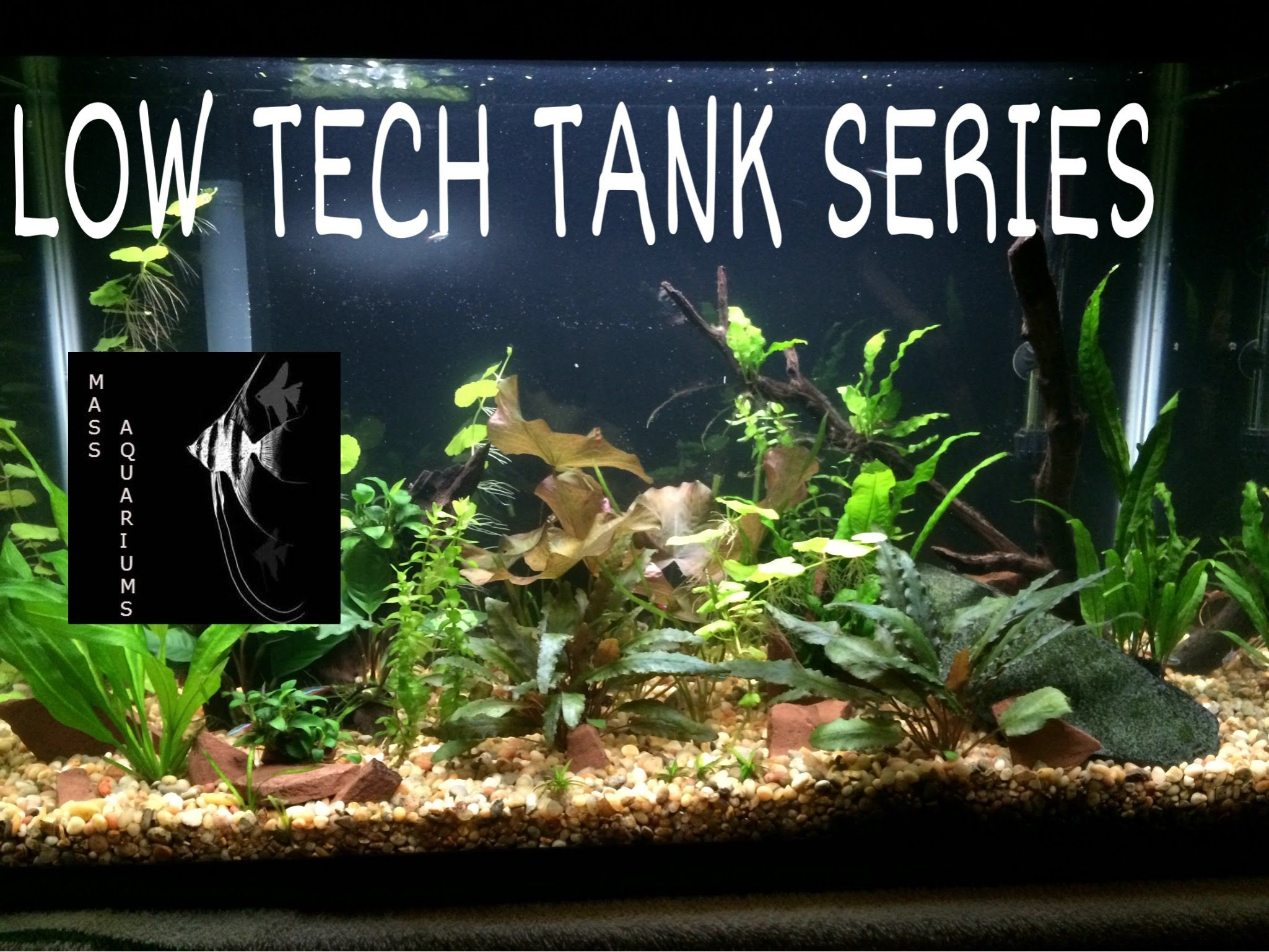 Low Tech Tank Series 1 Substrate and Lighting