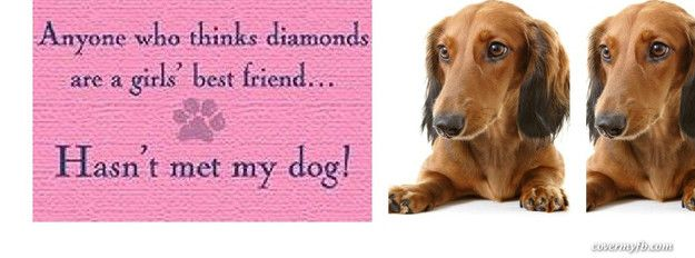 Dachshund Pictures With Cute Sayings Facebook Covers Fb Covers