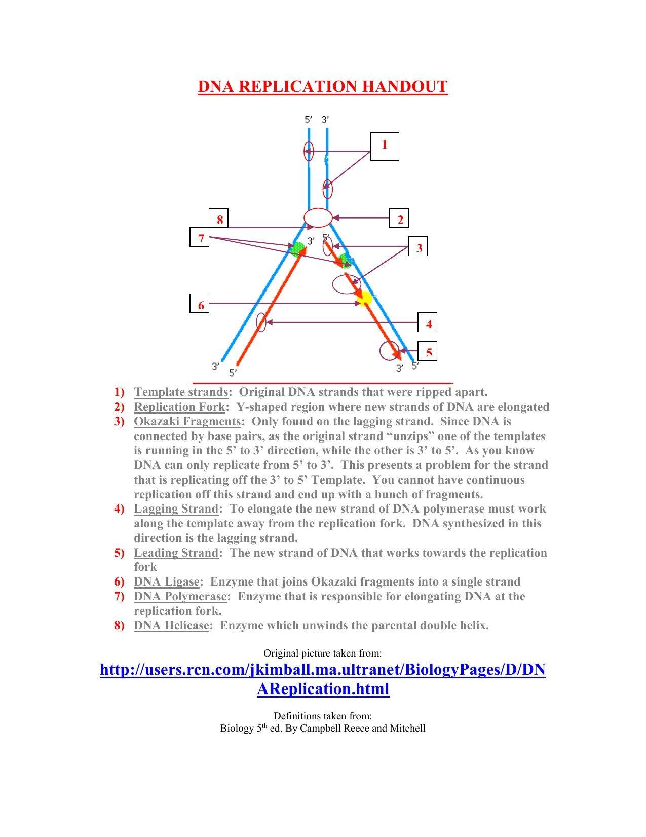 9 Legal Dna Molecule And Replication Worksheet Di