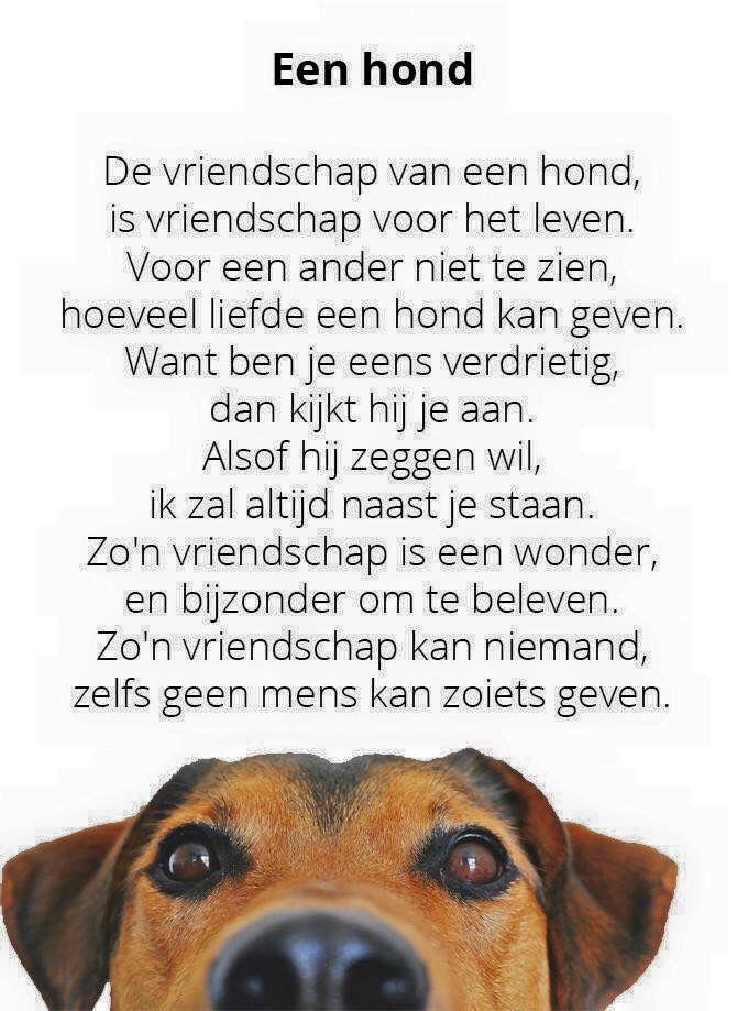 Citaten Over Honden : Vriendschap van een hond spreuken pinterest cute