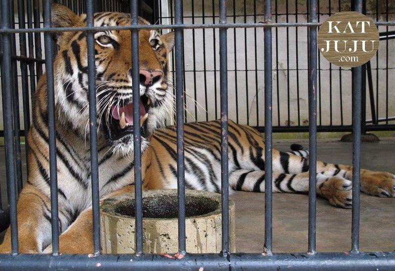 Phnom Tamao Zoological & Wildlife Rescue Centre Read more