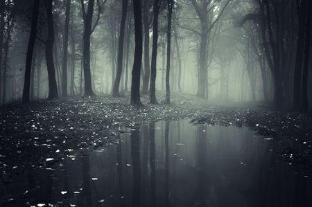 Weather Ology Special Ghost Spots Farmers Almanac Forest Wallpaper Landscape Wallpaper Dark Wallpaper
