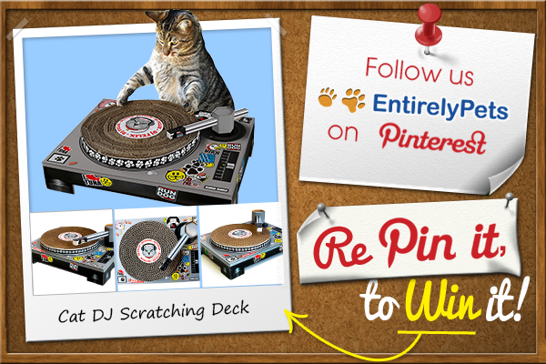 1) Follow @EntirelyPets.com.com on #Pinterest.  2) #Repin this photo for a chance to win a Cat DJ Scratching Deck!  Contest Ends: March 25, 2014