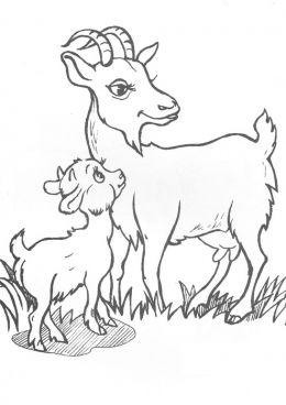раскраска коза и козленок скачать и распечатать раскраску