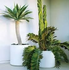 Image result for minimalist house plants Mod Pod