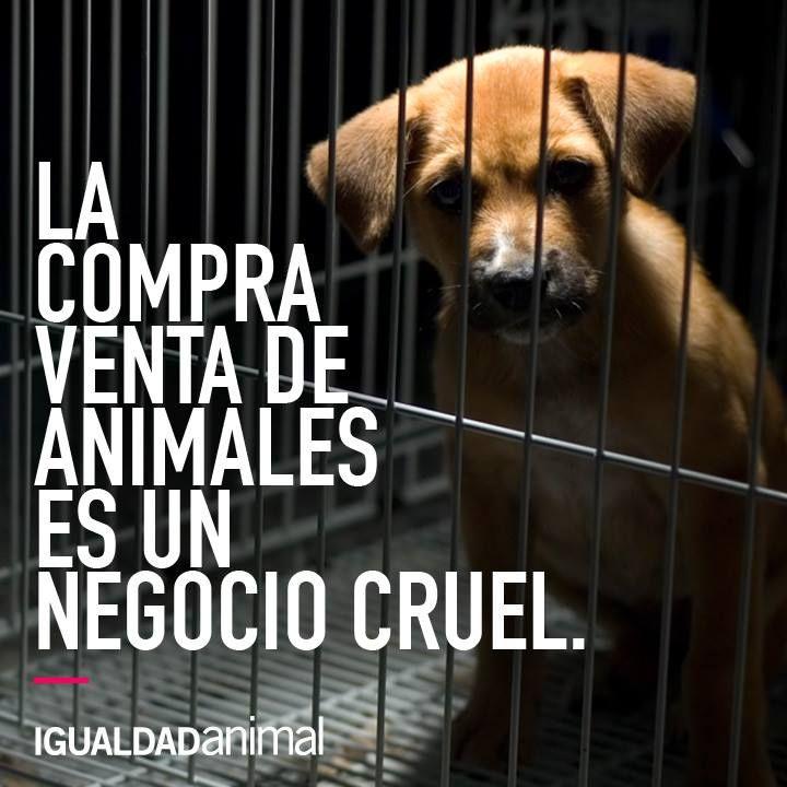 La Compra Venta De Animales Es Un Negocio Cruel E Injusto Por Favor Si Puedes Responsabilizarte De Un Animal Pobre Perro Criaderos De Perros Perro Sin Pelo