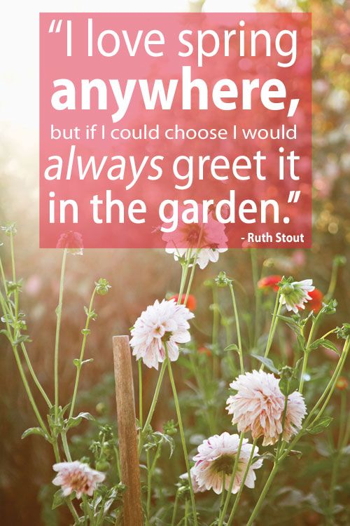 I Love Spring Anywhere: Our Best Garden Tips   In The Garden
