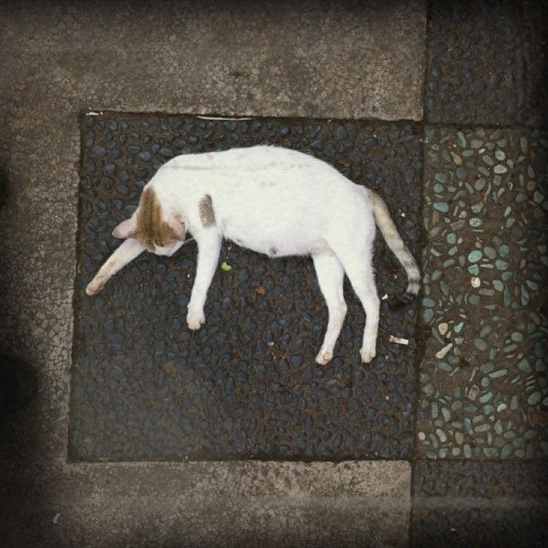 Its comforting to know that even Magnum photographs take pictures of cats LOL!