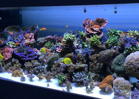 Photo of Aquarium Forums for Information such as LED Lighting, UV, Fi…