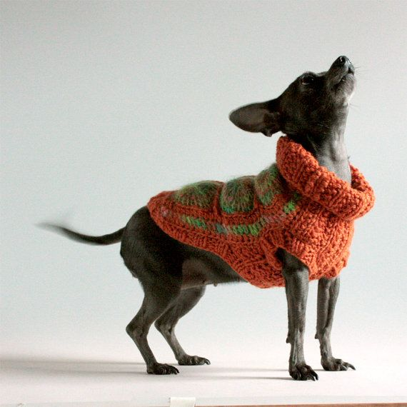 granny square afghan sweater for a dog   Lady   Pinterest   Granny ...