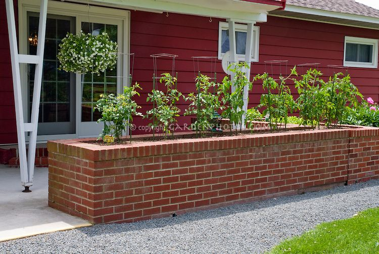 brick raised vegetable beds tomatoes in raised garden bed made of