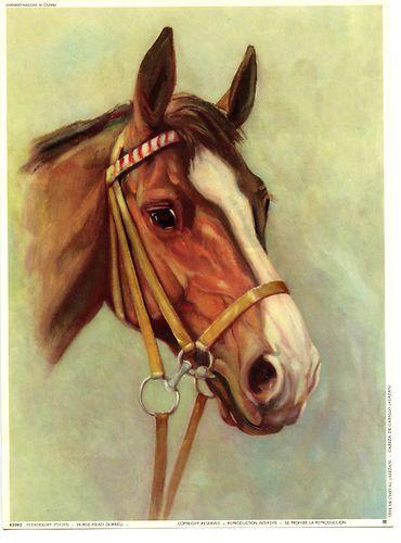 Beautiful Drawing Head Of Horse Sorrel Western Germany Vintage Color Art Print Peinture Cheval Couleur Peinture Peinture