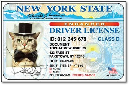 My New Fake I D Stories Cats And Kittens Humor