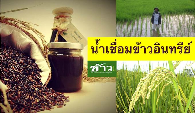 น าเช อม Organic จาก ข าวไทยพ นเม อง น ำเช อม