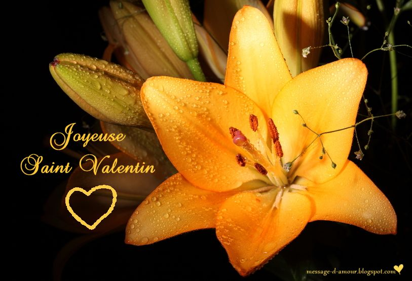 Retrouvez Les Plus Belles Cartes De Saint Valentin Gratuites Cartes Virtuelles Saint Valentin Un Carte Saint Valentin Citation Saint Valentin Carte Virtuelle