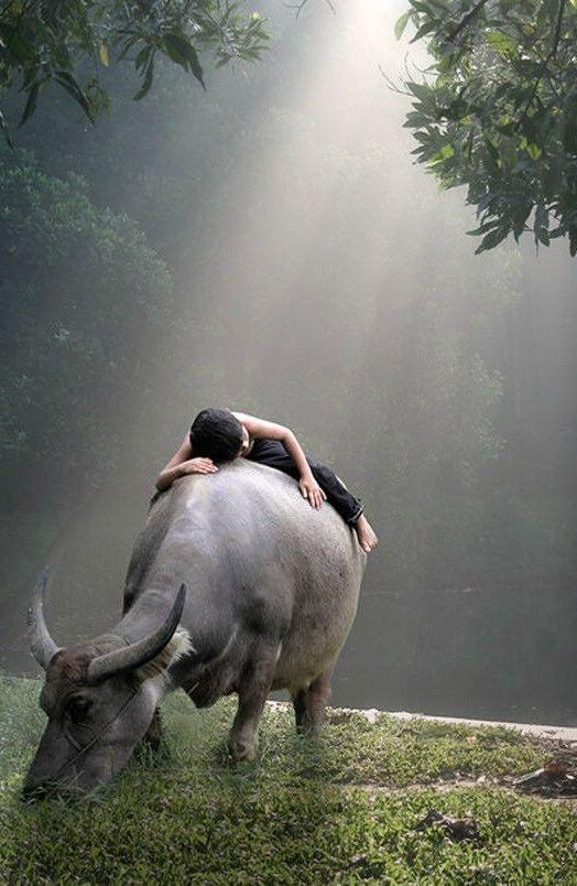 Série de fotos tocante mostra a amizade de dois garotos e seus búfalos gigantes