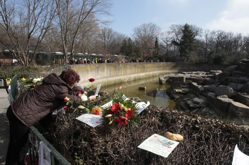 A woman places a rose at the polar bear enclosure in Berlin zoo, March 20, 2011. Knut, the polar bear who became a global celebrity as a cute cub, died in Berlin zoo aged just four. Knut, the first polar bear born at the zoo for more than 30 years, was rejected by his mother and fed instead by his keeper Thomas Doerflein. Thousands of visitors came to watch keeper and cub playing together, and Knut's fame soon spread around the world. REUTERS/Tobias Schwarz
