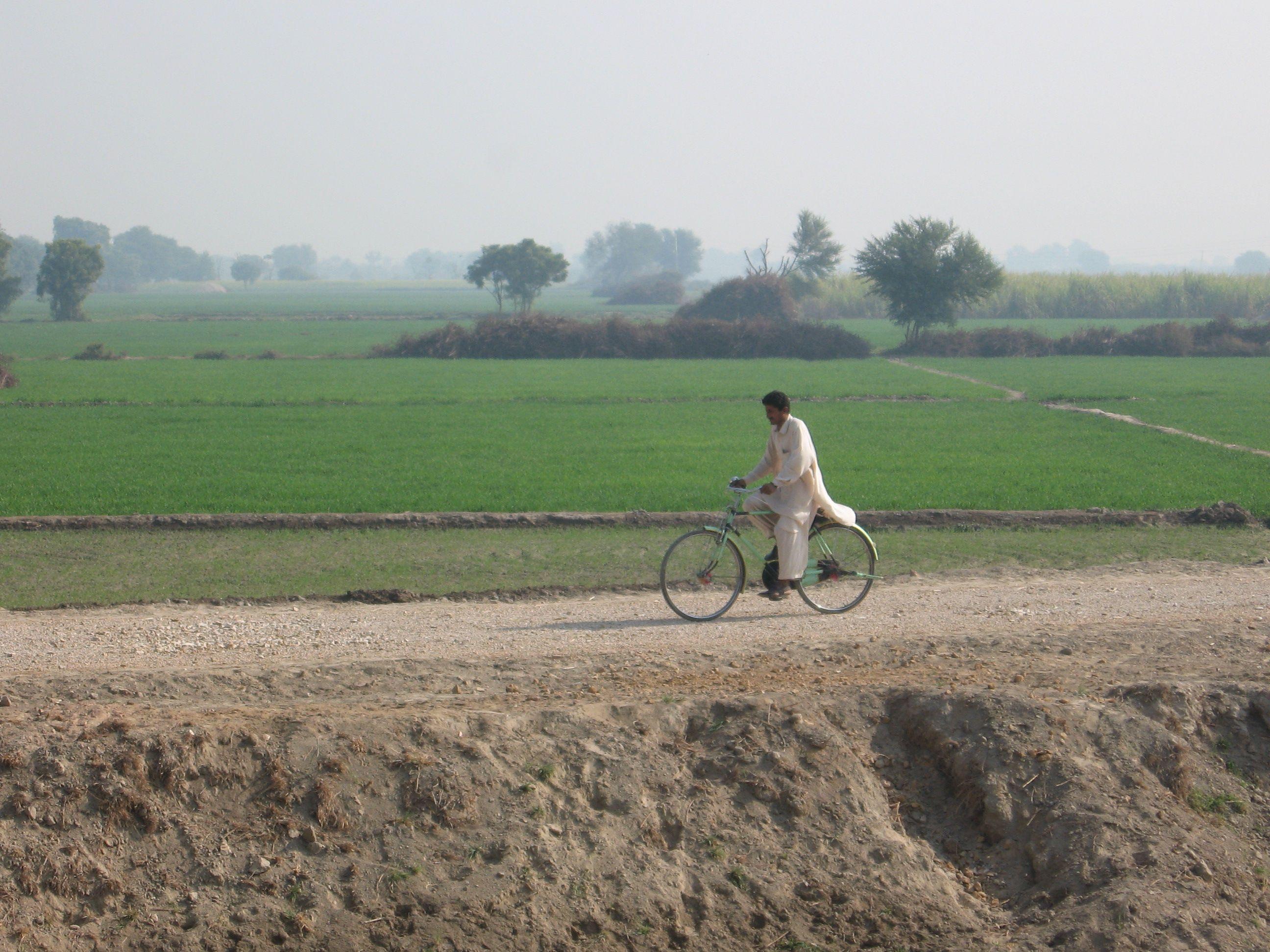 Farms near Sukkhar,Pakistan