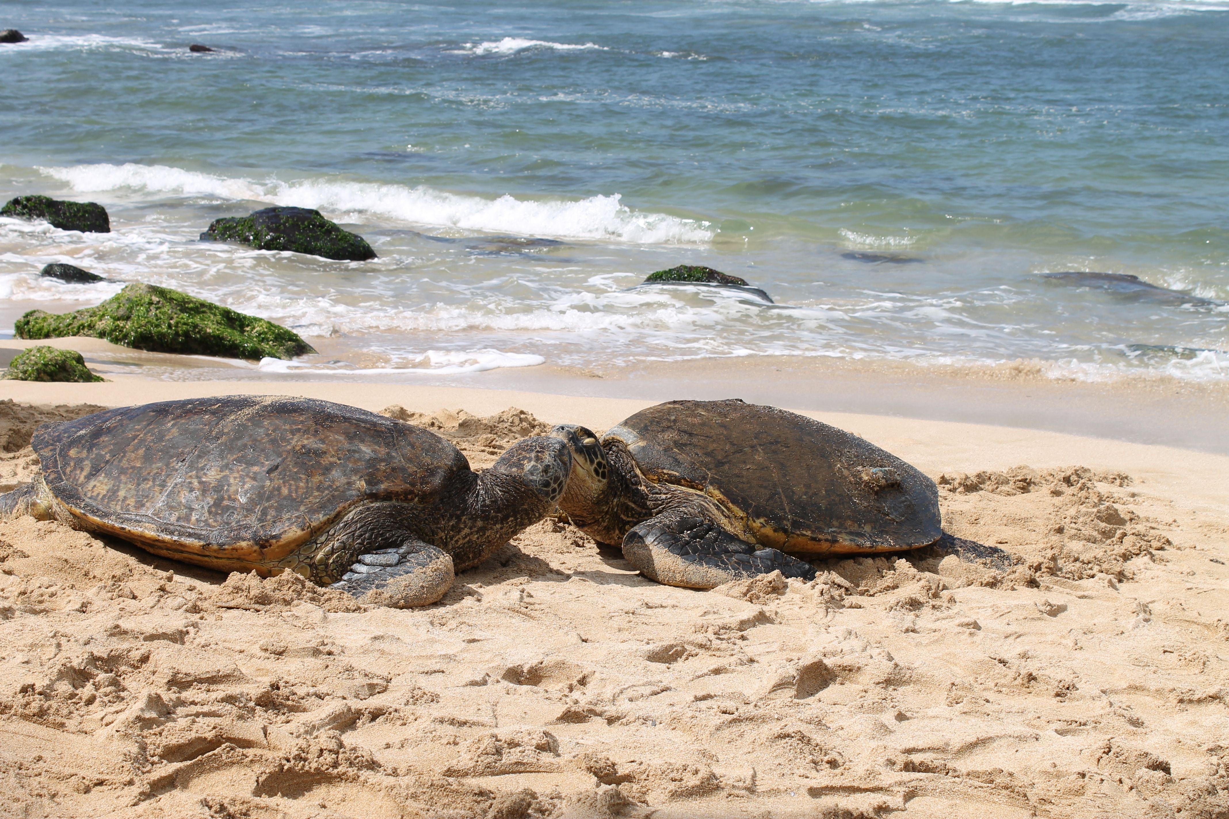 этот фото турция сиде остров черепах наличии