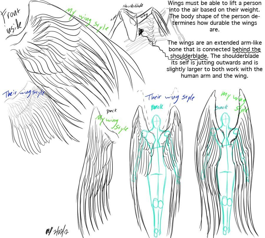 Angel Wing Anatomy 1000+ images about modeling studio on pinterest ...
