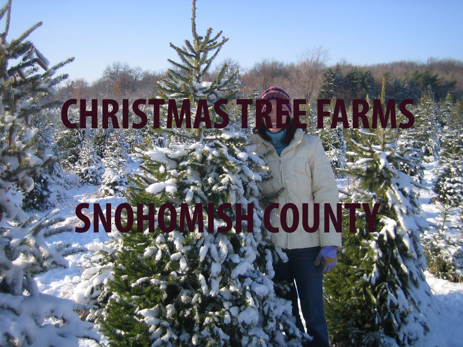 Christmas Tree Farms In Snohomish County Http Www Snohomish Org Misc Christmas Tree Farms Christmas Tree Farm Tree Farms Christmas Tree