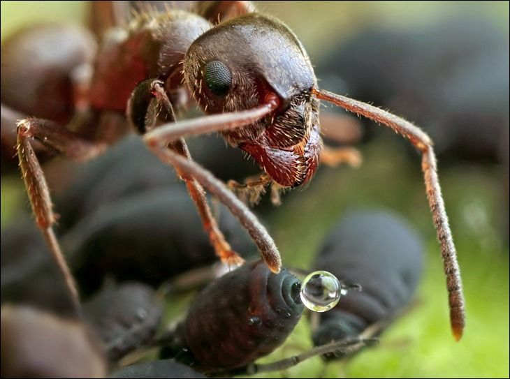 ants and caterpillars symbiotic relationship